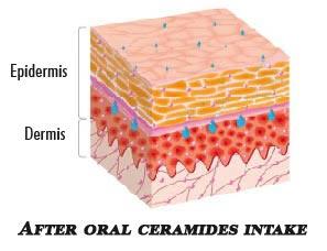 Ceramides after
